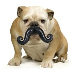 Humunga Stache Dog Toy