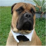 Doggie Tuxedo Collar